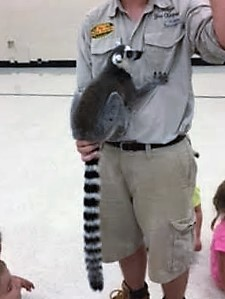 Lemur - Check out that tail!